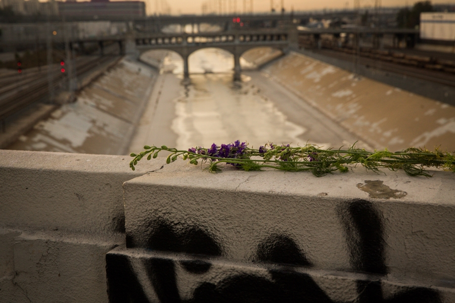 http://www.heathermobrien.com/files/gimgs/th-62_62_where-larkspur-once-grew-freely-a-funeral-for-the-6th-street-viaduct-7.jpg
