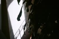 http://www.heathermobrien.com/files/gimgs/th-74_74_heather-m-obrien-38.jpg